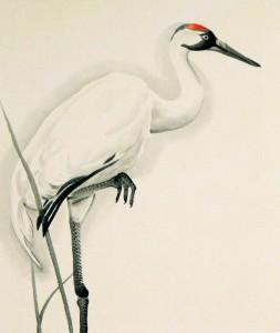 whooping_crane1_13x17