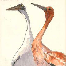 young-mature-crane